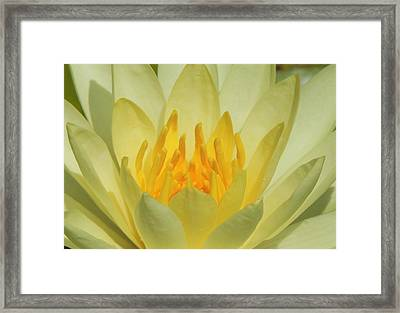 Shades Of Yellow Framed Print