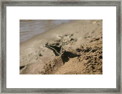 Framed Print featuring the photograph shadow Boxer by Marie Neder