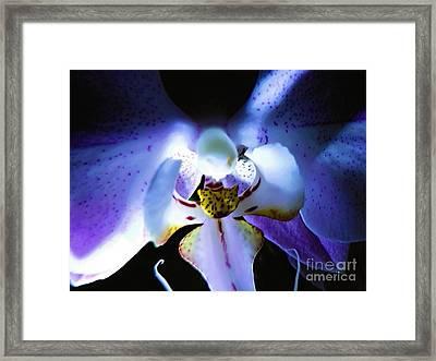 Shadow Dance Framed Print by Robyn King
