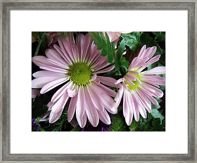 Shadow Dancing Framed Print