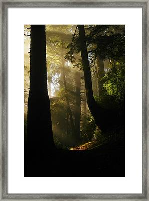 Shadow Dreams Framed Print by Jeff Swan