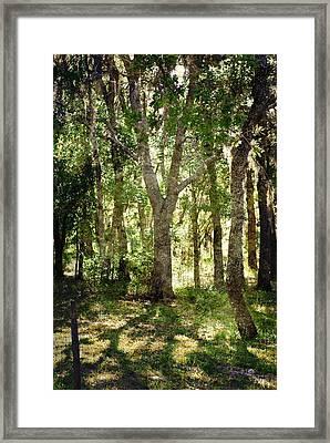 Shadow Forest Framed Print
