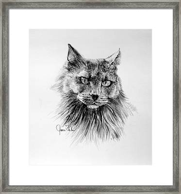 Shadow Framed Print by James Skiles