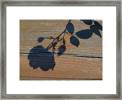 Shadow Of Beauty Framed Print