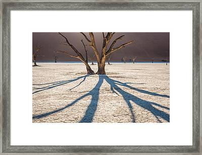 Shadow Of The Camel Thorn - Dead Vlei Photograph Framed Print by Duane Miller