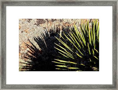 Shadow Of The Yucca Plant Framed Print