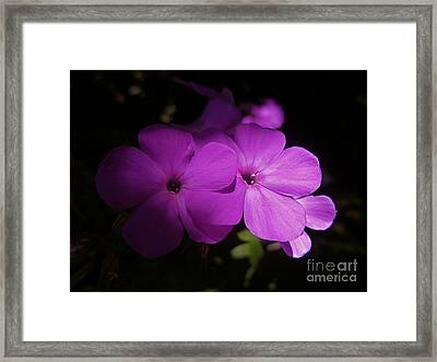 Shadow Phlox Framed Print by Tim Good