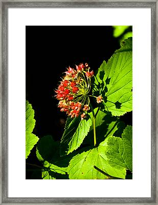Shadow Pla 570 Framed Print