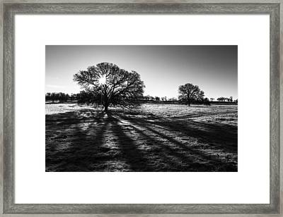 Shadow Play Framed Print by Randy Wood