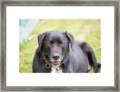 Shadow Relaxing Framed Print