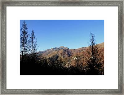 Shadow Sentinels Framed Print by Frederic Vigne