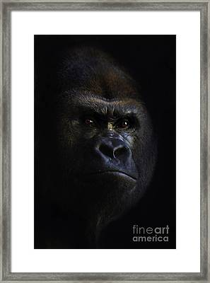 Shadow Series Five Framed Print