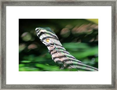 Shadow Stripes Framed Print by Shane Bechler