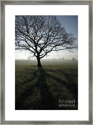 Shadow Tree Framed Print by Anne Gilbert