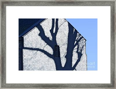 Shadow Tree Framed Print by Bernard Jaubert
