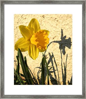 Shadowing Me Framed Print by Chris Berry
