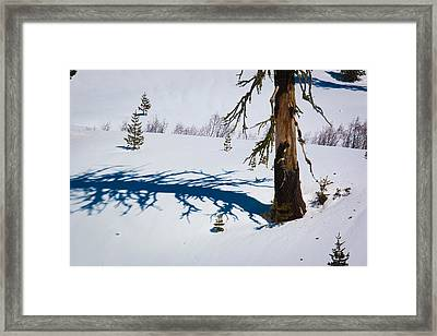 Shadowland Framed Print by Jan Davies