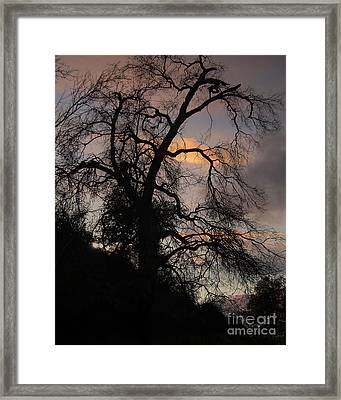 Shadowlands 5 Framed Print by Bedros Awak