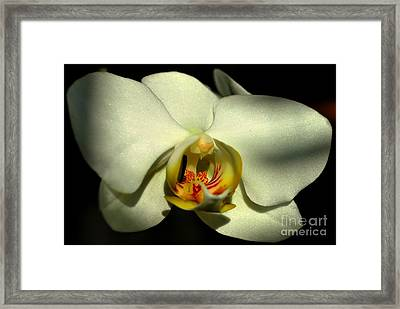 Shadows II Framed Print