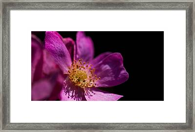Shadows In My Heart Framed Print by Alex Lapidus
