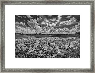 Shadows In The Afternoon Framed Print by Jon Glaser