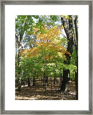 Shadows In The Forest Framed Print