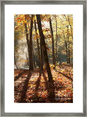 Shadows In The Forest Framed Print by Iris Greenwell