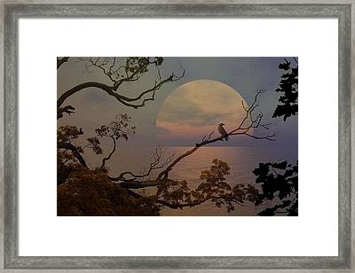 Shadows In The Moonlight Framed Print by Virginia Lankford-Dillman