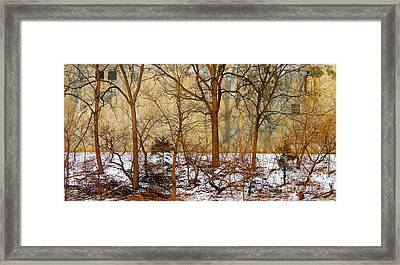 Framed Print featuring the photograph Shadows In The Urban Jungle by Nina Silver