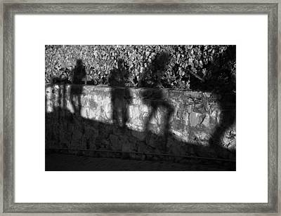 Shadows In The Vineyard Framed Print