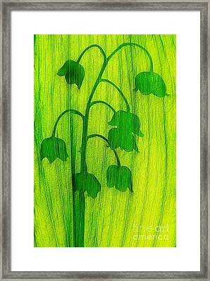 Shadows Lily Of The Valley Flowers Framed Print