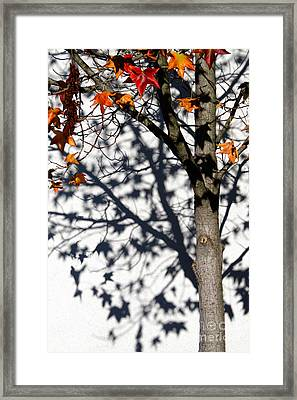 Framed Print featuring the photograph Shadows Of Fall by CML Brown