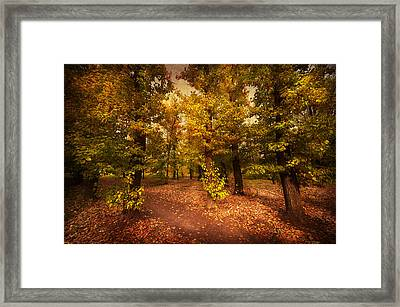Shadows Of Forest Framed Print by Svetlana Sewell