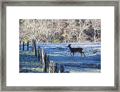 Shadows Of Morning Framed Print by Leslie Kirk
