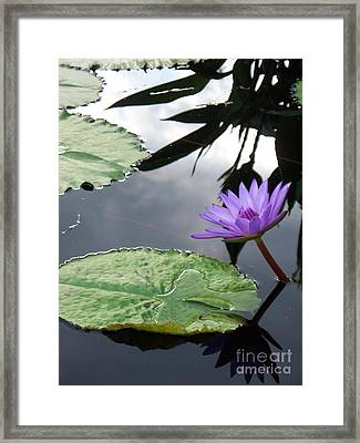 Shadows On A Lily Pond Framed Print by Eric  Schiabor