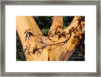 Shadows On Arbutus Framed Print