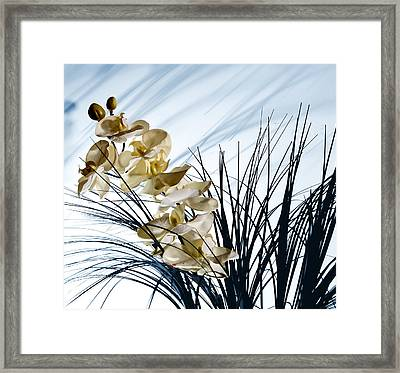 Shadows On The Wall Framed Print by Cecil Fuselier