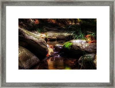 Shadowy Home For Trout Framed Print