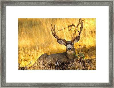 Framed Print featuring the photograph Shady Buck by Aaron Whittemore