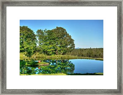 Shady Day Framed Print