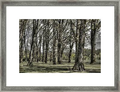 Shady Grove Framed Print by Jean Noren