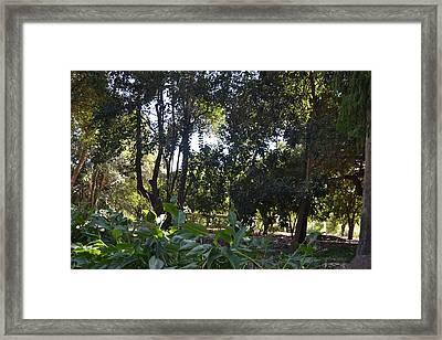 Shady Jungle Framed Print by Kiros Berhane