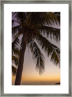 Shady Palm Framed Print by Kristopher Schoenleber