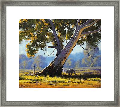 Shady Tree Framed Print