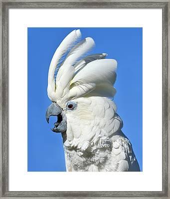 Shady Umbrella Framed Print by Tony Beck