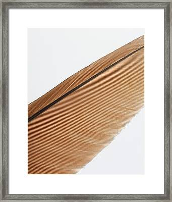 Shaft And Barbs Of Elongated Framed Print
