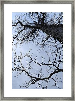 Shagbark Framed Print by Daniel J Kasztelan