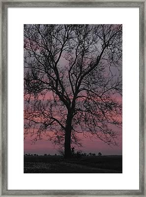 Shagbark Hickory Framed Print by Daniel J Kasztelan