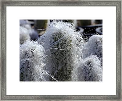 Shaggy Cactus Framed Print