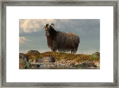 Shaggy Goat Framed Print
